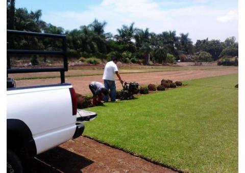 PASTO EN ROLLO (Tenemos la mejor calidad, al mejor precio, somos productores directos) CUERNAVACA